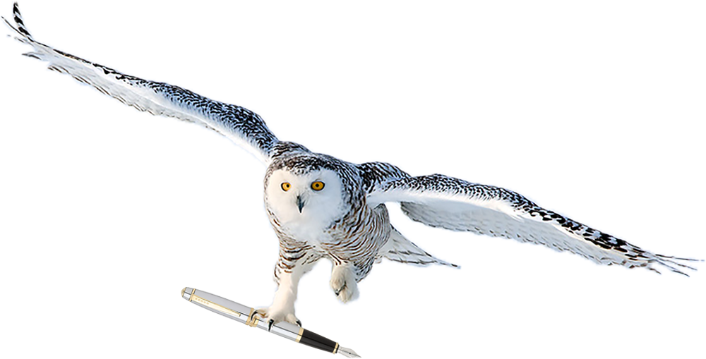 Snow Owl Flying with Pen — Life is a Journey not a race. Let us take the Flight...Together!